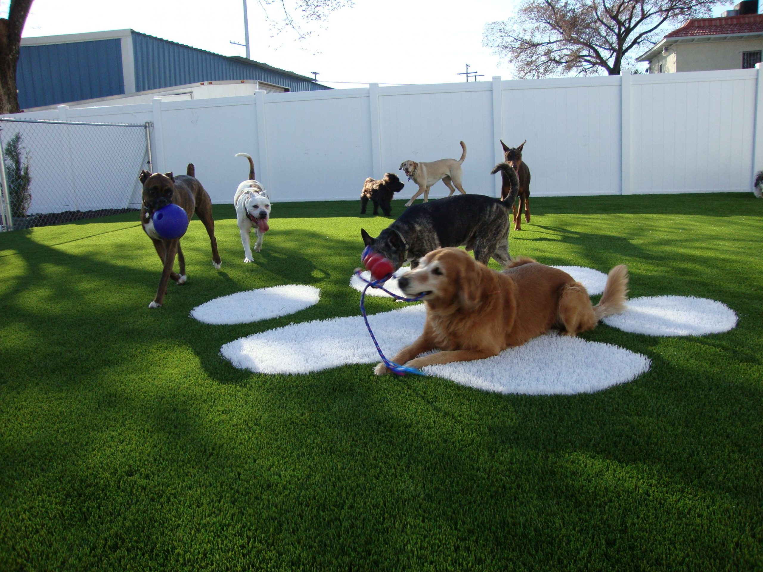 How to Choose A Good Pet Care Facility?