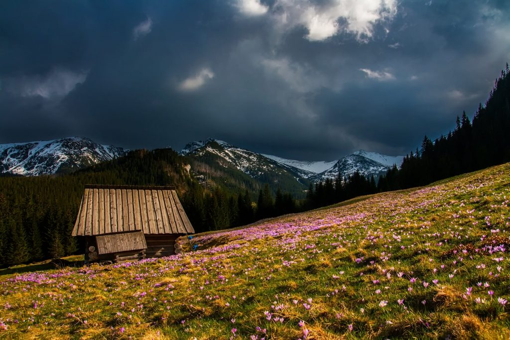The Ultimate Secret Of All About Valley of Flowers Trek