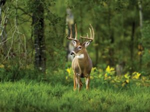 The Growing Trend of Deer Hunting and the Affordable Way to do it
