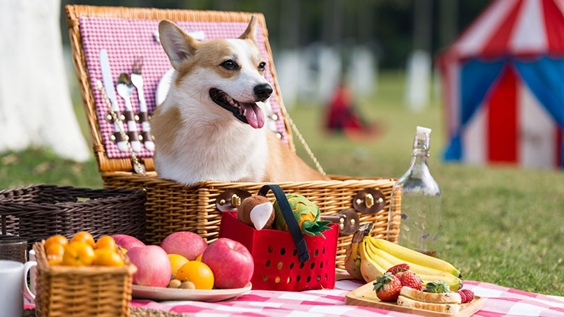 What Should I Feed My Dog? List of Human Foods that Dogs Can Eat Also