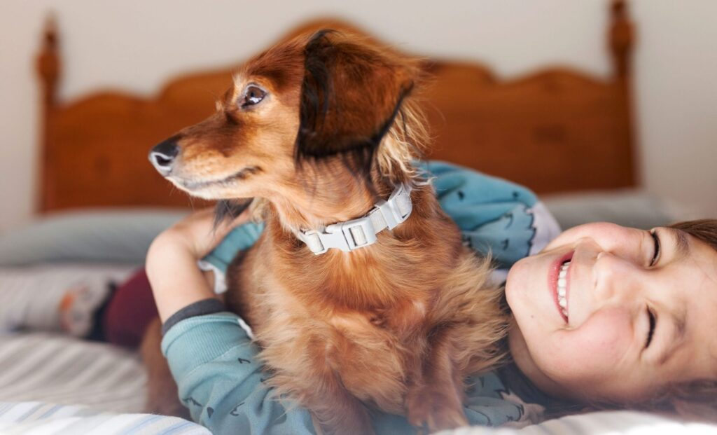 Things you must consider before choosing your lovely pet